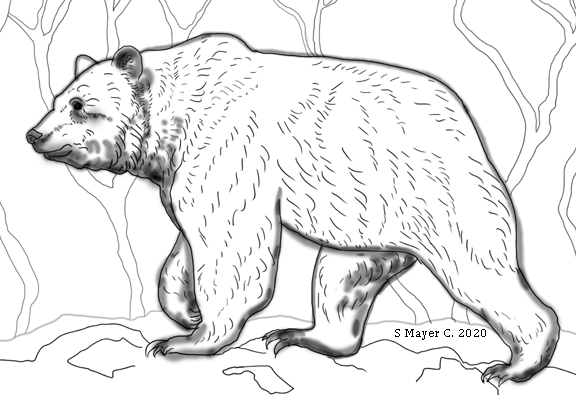 grizzly bear8
